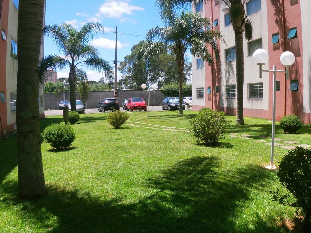Alugar Apartamento / Kitinete em Ponta Grossa R$ 450,00 - Foto 14