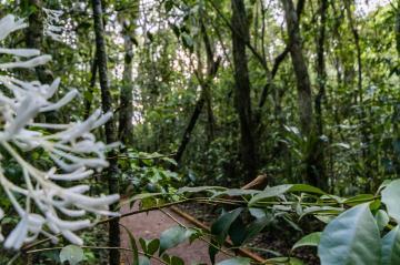Comprar Terreno / Condomínio em Ponta Grossa R$ 119.006,60 - Foto 27