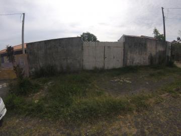 Terreno / Padrão em Ponta Grossa Alugar por R$700,00